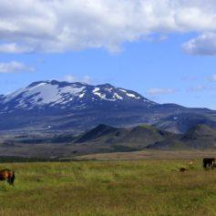 IJslandse paarden voor de Hekla, Zuid IJsland